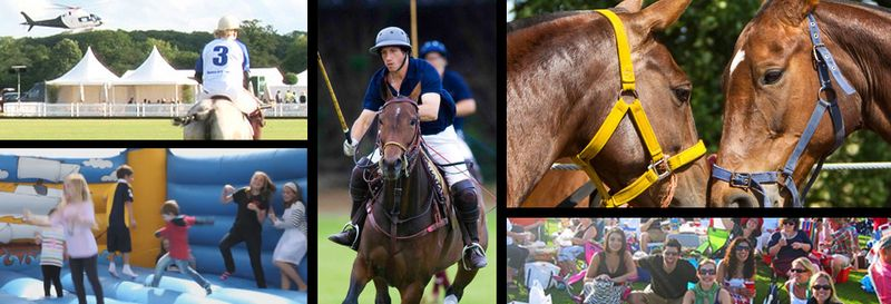 Norfolk Polo Images