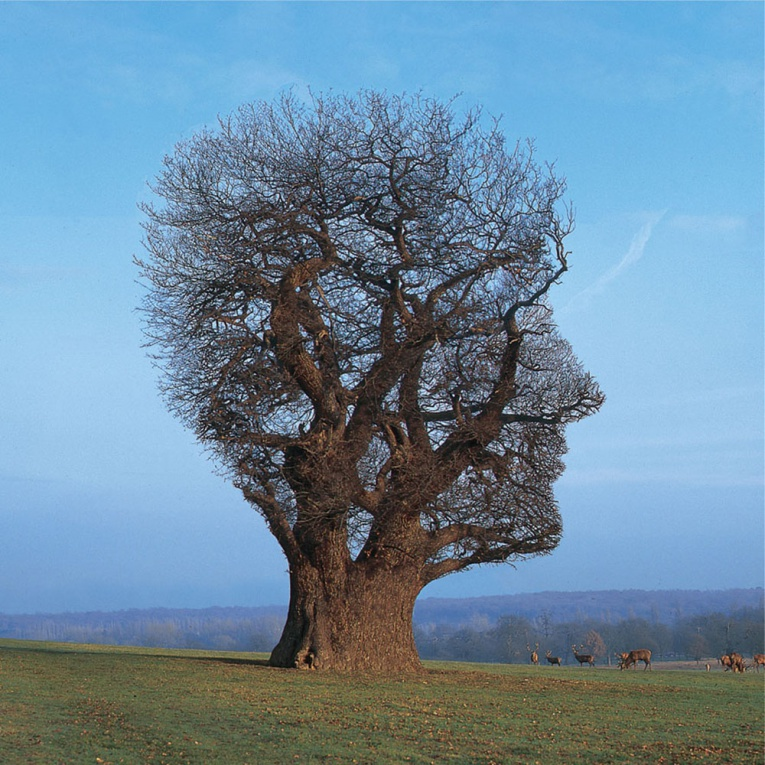 Storm Thorgerson Tree Face