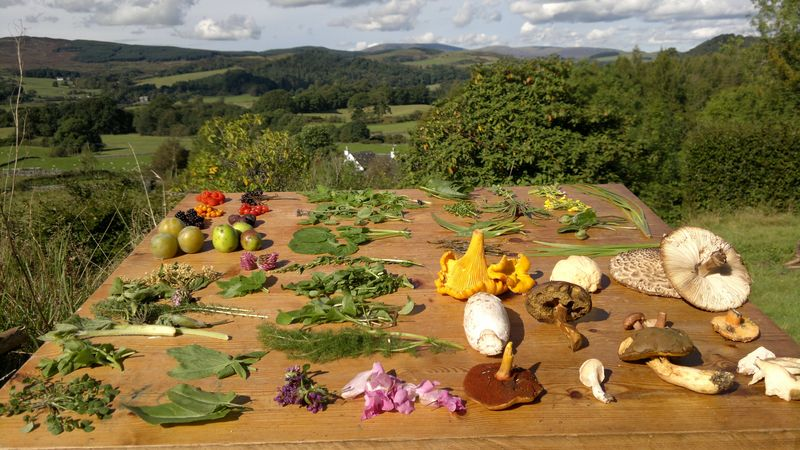 WIld food from foraging